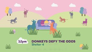 Donkeys defy the odds (Re-record) | Sanctuary From Your Sofa