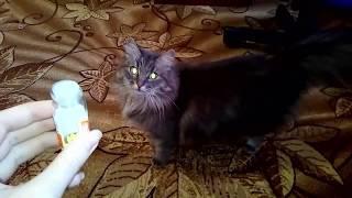 Интересное видео. Почему коты и кошки любят валерьянку