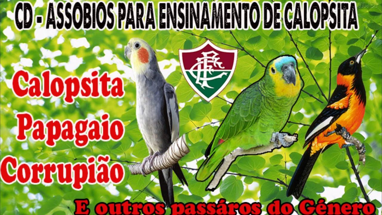 CALOPSITA BAIXAR DE ENSINAMENTO CD PARA ASSOBIOS