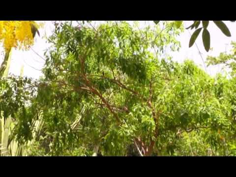 Gardens Of Antigua featuring Sarah Fuller's Garden@ Hogdes Bay