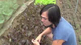 Organic Farming in the Philippines (Reality TV, Se 4 Ep 10: Those must be comfortable shoes!)
