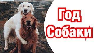 Год Собаки – описание и характеристика знака