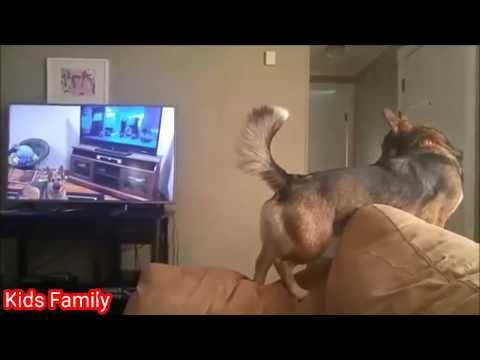 Dogs Watching TV Dogs Cartoon