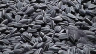 ai wei wei unilever series sunflower seeds