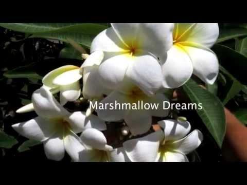 Sun Harbor Nursery - Paradise Garden Plumeria Tour