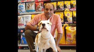 PitBull the World's most Ferocious Dogs? | By Baadal Bhandaari | Pathankot Punjab 9878474748
