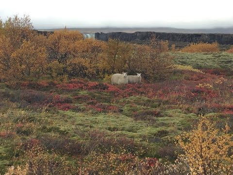 Iceland in Autumn / October - 6 Days trip - Amazing Travel Experience