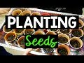 Planting Seeds at School | A Classroom Diva