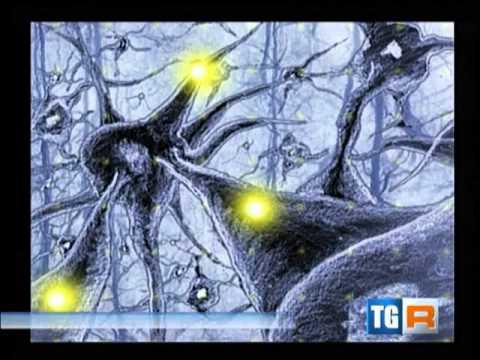 16 marzo 2013 intervista tg3 a mauro vecchiato su neuroni specchio autismo e psicomotricit - Neuroni specchio e autismo ...