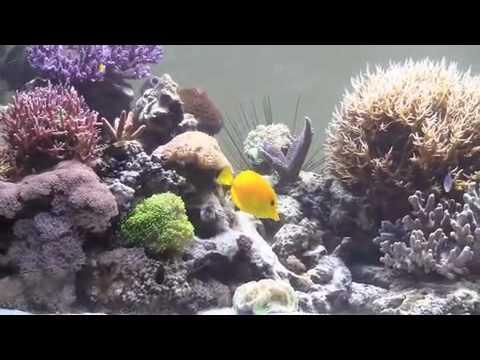 acquario milo-iphone.m4v - youtube