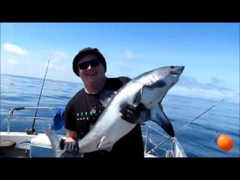 Shark Fishing - Out of Kilmore Quay
