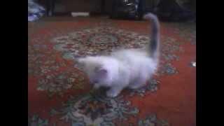 мой котёнок под музыку вискас))