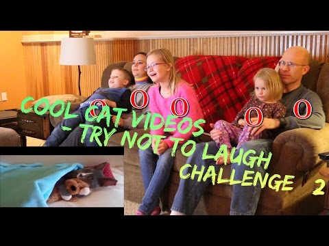 Try Not to Laugh Challenge Reaction 2 Funny Cats | Cool Cat Videos Family Game