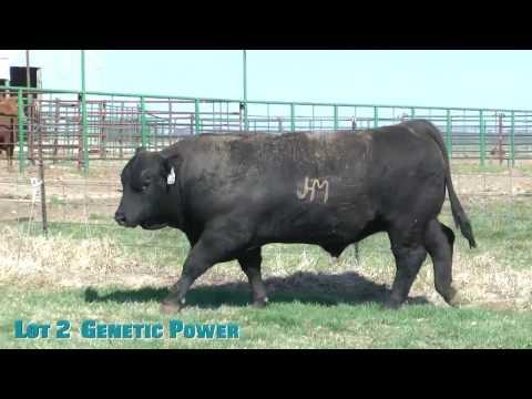 Lot 2  Genetic Power