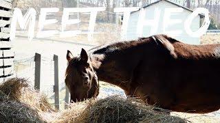 BUYING MY NEW HORSE | Meet Theo