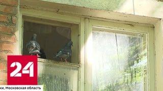 В Химках голуби терроризируют жильцов дома - Россия 24
