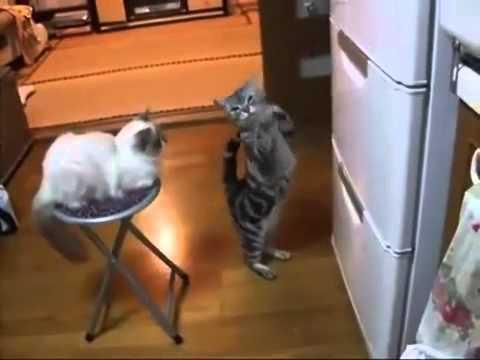 Unduh 80+  Gambar Lucu Kucing Joget Terlihat Keren HD