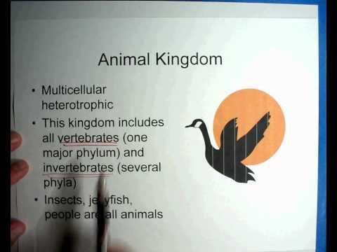 Biology #9 - Part 1 - Taxonomy of Organisms 00_00_00-00_08_43.wmv