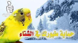 كيف احمي طيور البادجي من البرد