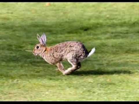 """David """"Stringbean"""" Akeman - Run Rabbit Run"""