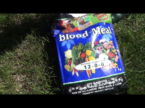 Boosting Growth in the Pepper Garden with Blood Meal