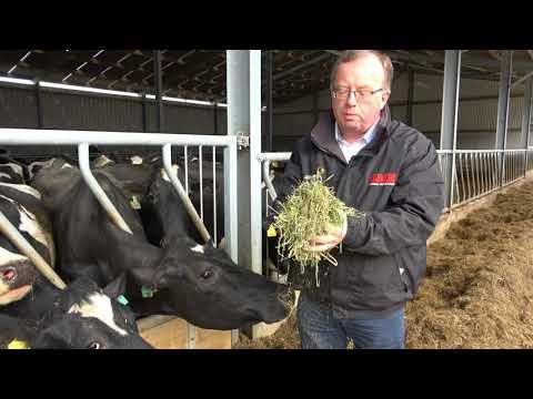 Alfalfa Forage Grass Update for dairy cows Spring 2018