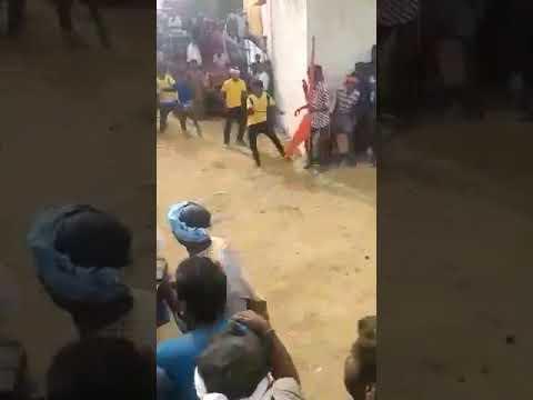 Hori habba in Mallur full hava chandu and pipeee