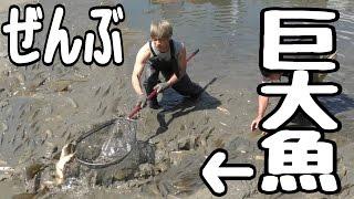 大量に巨大魚が捕れる場所に行ってみた thumbnail