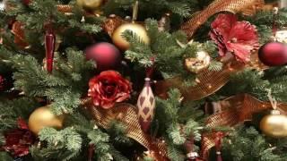 Cùng Mẹ Con Dâng Chúa Hài Nhi | Nhạc Thánh Ca | Nhạc Noel
