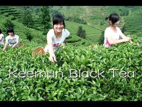 """LIVE: Tea industry reinvigorated with technological innovations in Anhui, China """"科技引擎"""" 助茶业走向世界"""
