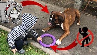 Что будет если ребёнок рискнёт отобрать у собаки игрушку