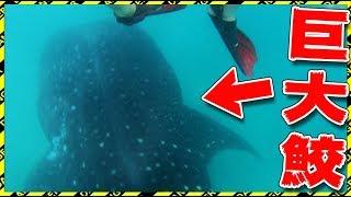【衝撃】 4m級のサメが俺の真下を通って死にかけた! thumbnail