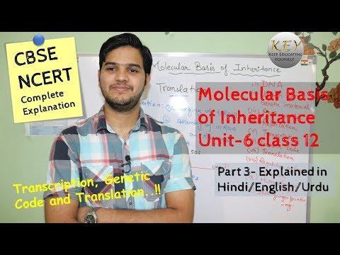 Molecular Basis of Inheritance class 12 # NCERT chapter 6 part 3 Hindi/اردو thumbnail
