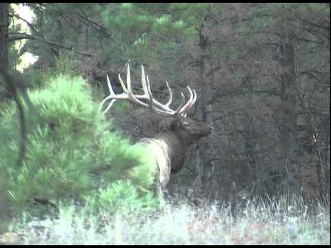 Arizona Elk Hunting- NW Archery Hunt With Chappell Guide Service