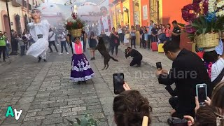Dancing Stray Dog Steals the Show at Mexico Festival
