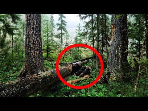 Мужчина нашел в лесу то, о чем БОЯЛСЯ рассказать даже жене. Эта находка изменила его жизнь НАВСЕГДА