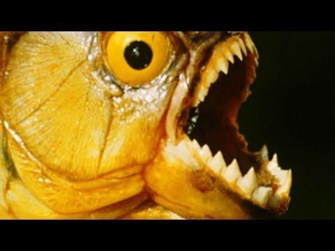 5 TERRIFYING PREDATORS Of The Amazon River Basin!