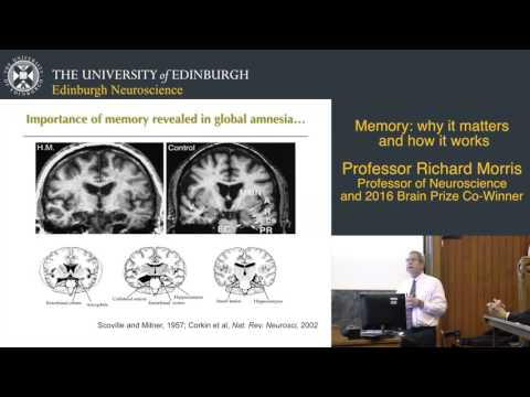 Memory: why it matters and how it works