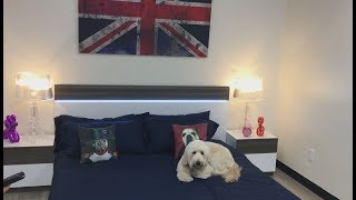 Luxury pet hotel offers Ferrari ride, Netflix viewing | ABC7