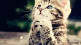 Котята, чудо природы!🐱🐯😘