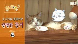 고양이를 부탁해 - 동글이와 동율이의 살벌한 동거2_#002 thumbnail