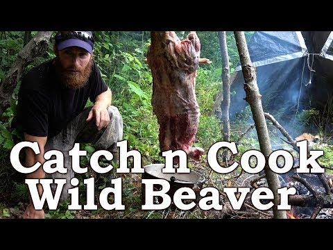 Catch n Cook WILD BEAVER!!!   BEYOND SURVIVAL   The Wilderness Living Challenge 2017   S02E04