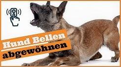 Hund bellt, wenn es klingelt / So entspannt dein Hund bei Besuch / Stressfrei Besuch empfangen