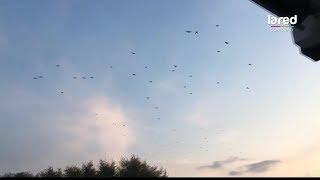 Últimos avistamientos OVNI: ¡misterioso objeto irrumpe vuelo de bandada de pájaros!