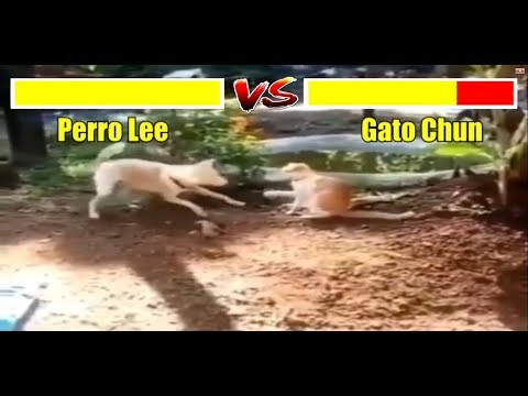 Perro vs Gato Viral (Dog vs Cat) Version Street Fighter 2019