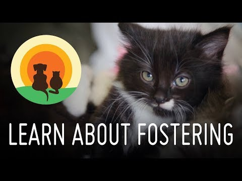 Pet Foster Care - Second Chance Animal Rescue