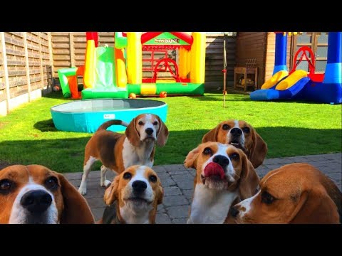 Funny Dogs Having a BOUNCE HOUSE PARTY!