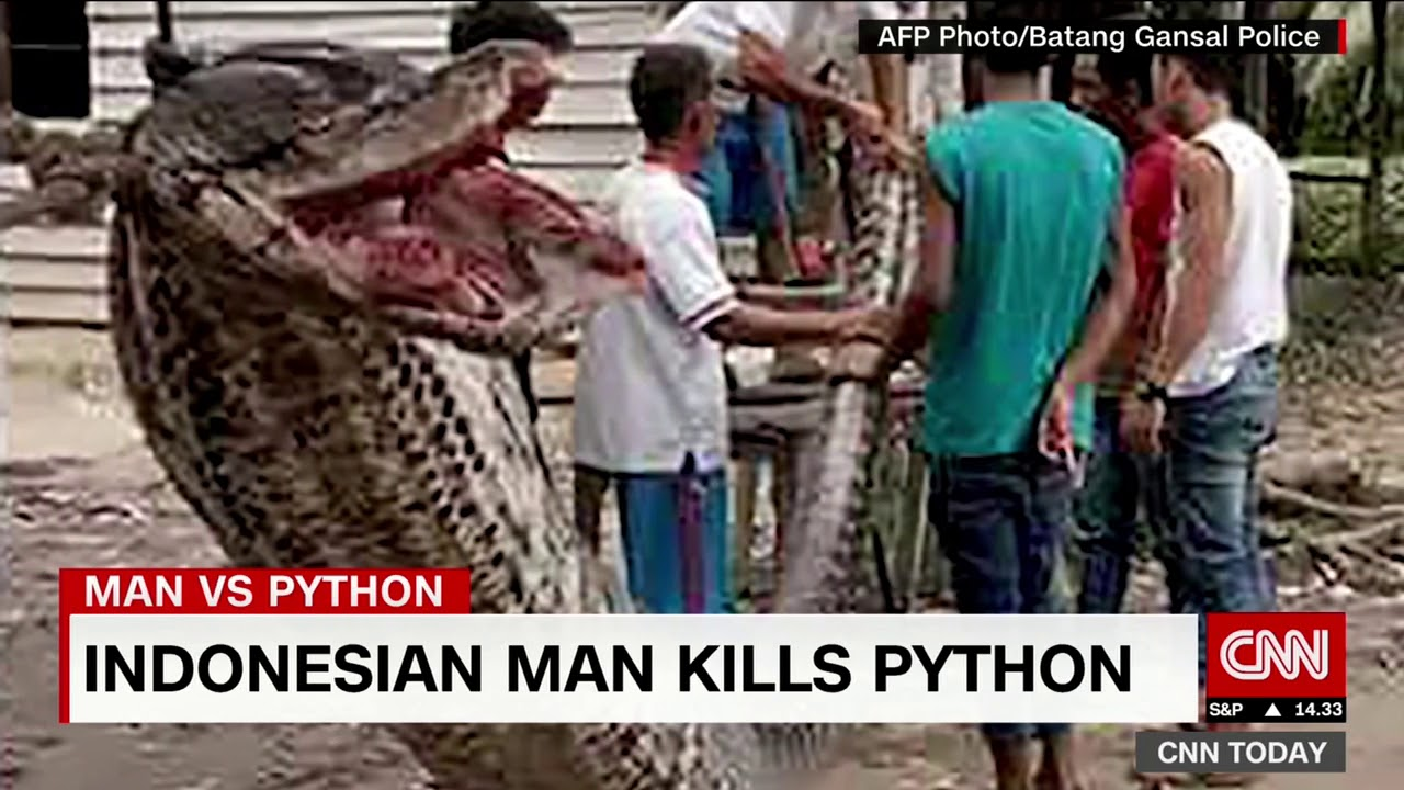 [WATCH] Indonesian man kills a 7m python