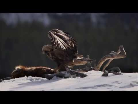 Petteri Saario: The Magic of Northern Nature
