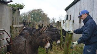 17 donkeys rescued in Ireland